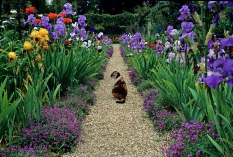 Создаем прекрасный сад из луковичных
