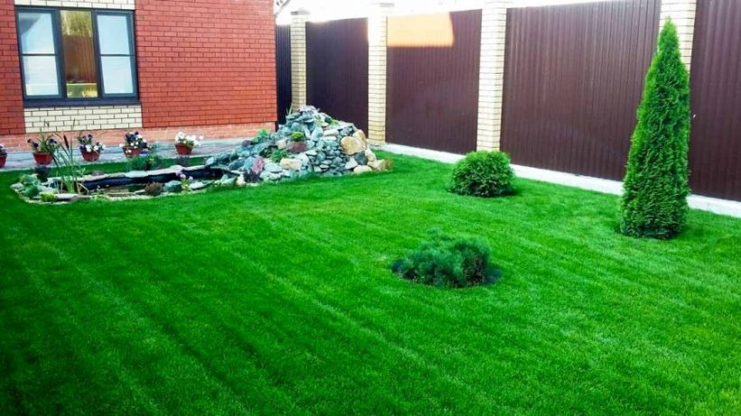 Рулонный газон: украшение для Вашего участка